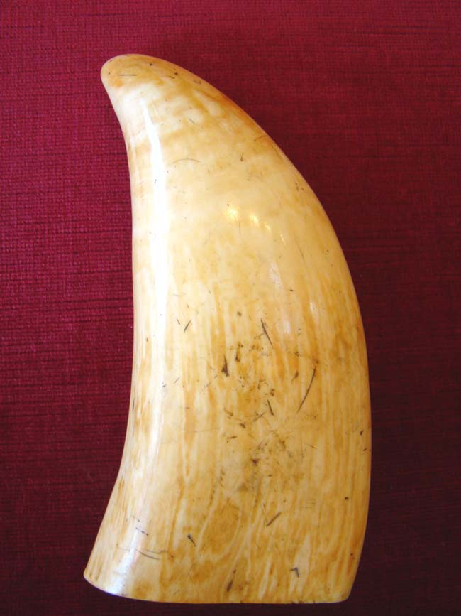 click to view larger image of A fine and large Scrimshaw Whale's tooth circa 1850