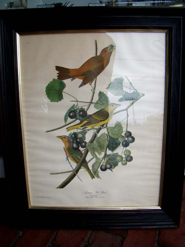 click to view larger image of A very nice John J. Audabon framed reprint of Summer Red Birds from the Havell edition