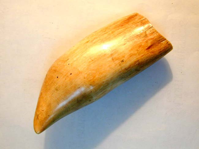 click to view larger image of A Wonderful Large 19th century Sperm Whale's Tooth 8 1/4