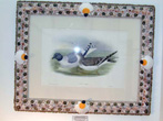 click to view detailed description of Hand Colored Antique Lithograph of Shore Birds by Gould and Richter in a Spectacular Shellwork Frame